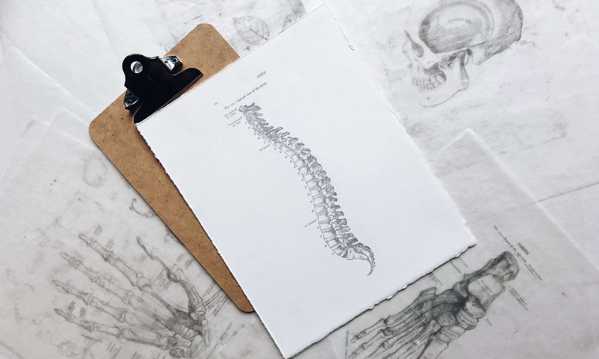 Clipboard with multiple pieces of paper of medical drawings - a labeled spine, foot, hand, and skull.